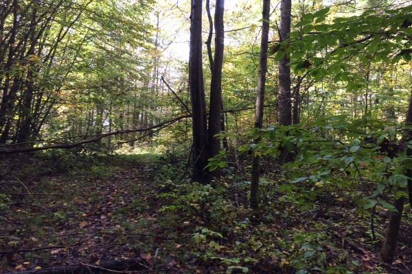 5 74 Acres Bat Cave Mtn Land Properties Asheville Nc Lake Lure And Western North Carolina Acreage Homesites And Land For Sale